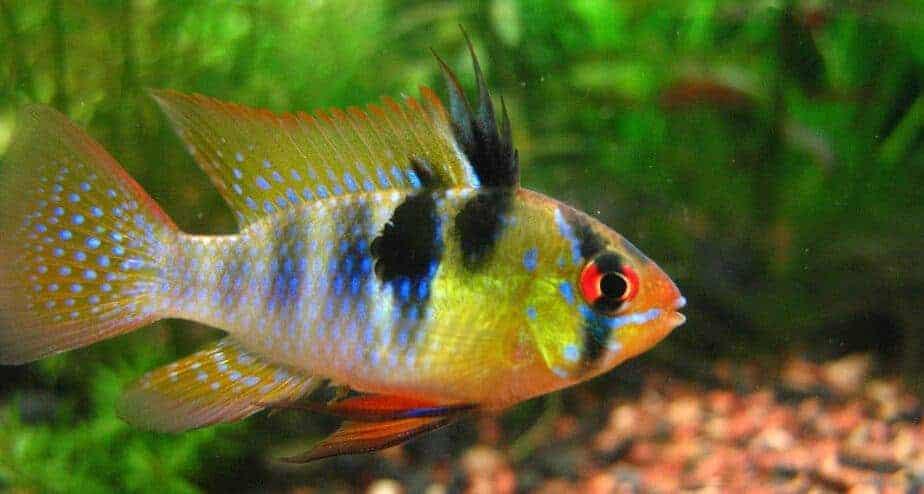 Do Fish Pee Aquarium Genius