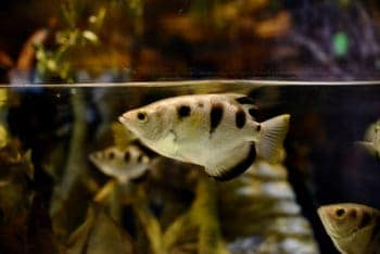 Dechlorinate your Aquarium Water for Fish and Plants