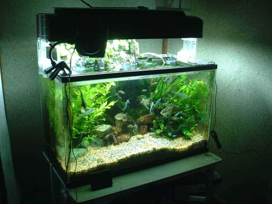 Where to Keep Your Fish While you are Cleaning the Aquarium