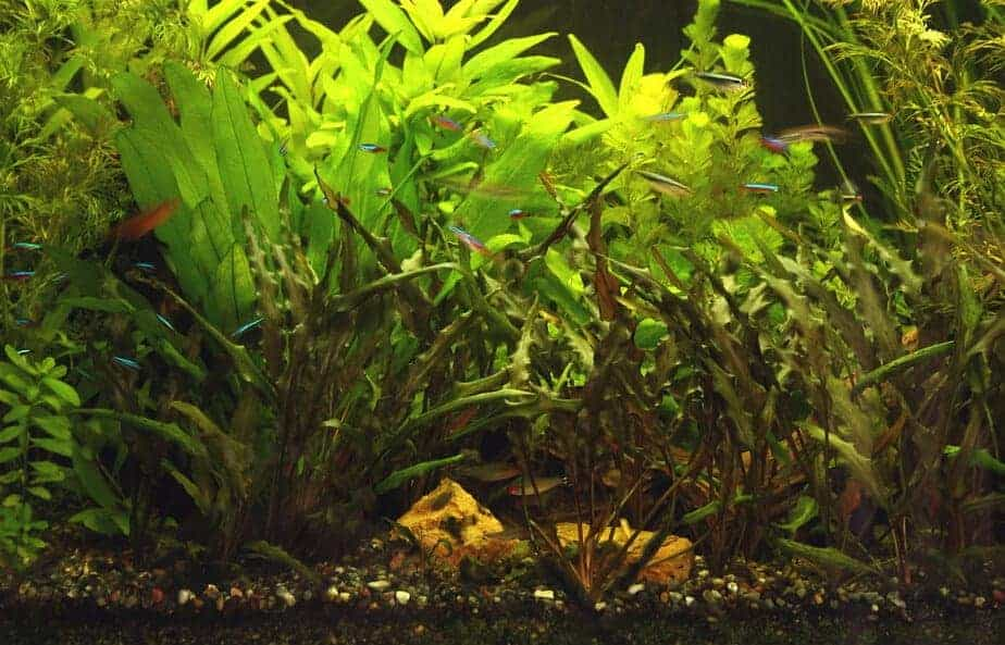 When can you Add Live Plants to your Aquarium