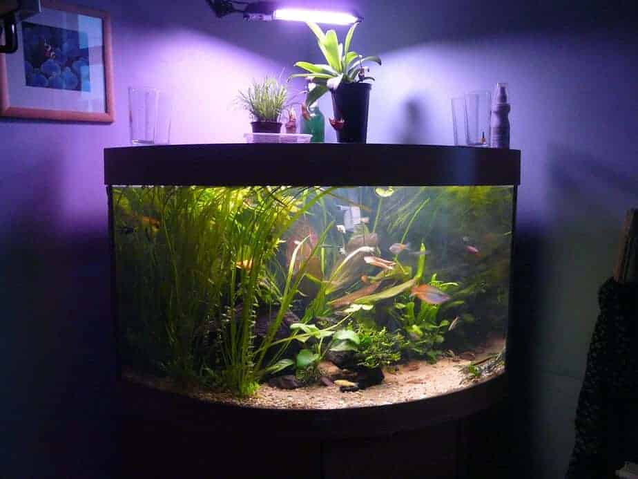Do Aquarium Fish Need Light at Night or can you Turn it Off?