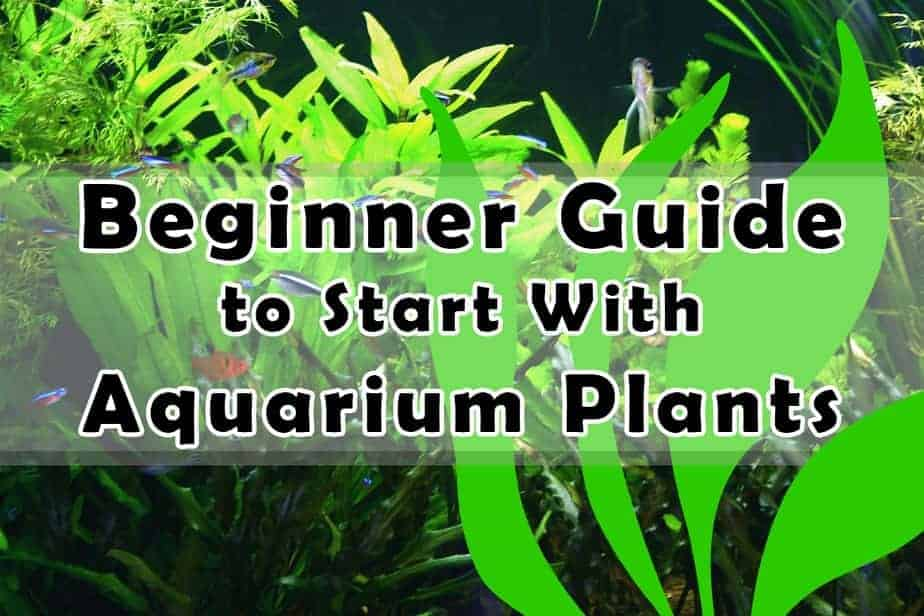 The Clear Beginner Guide to Start with Aquarium Plants