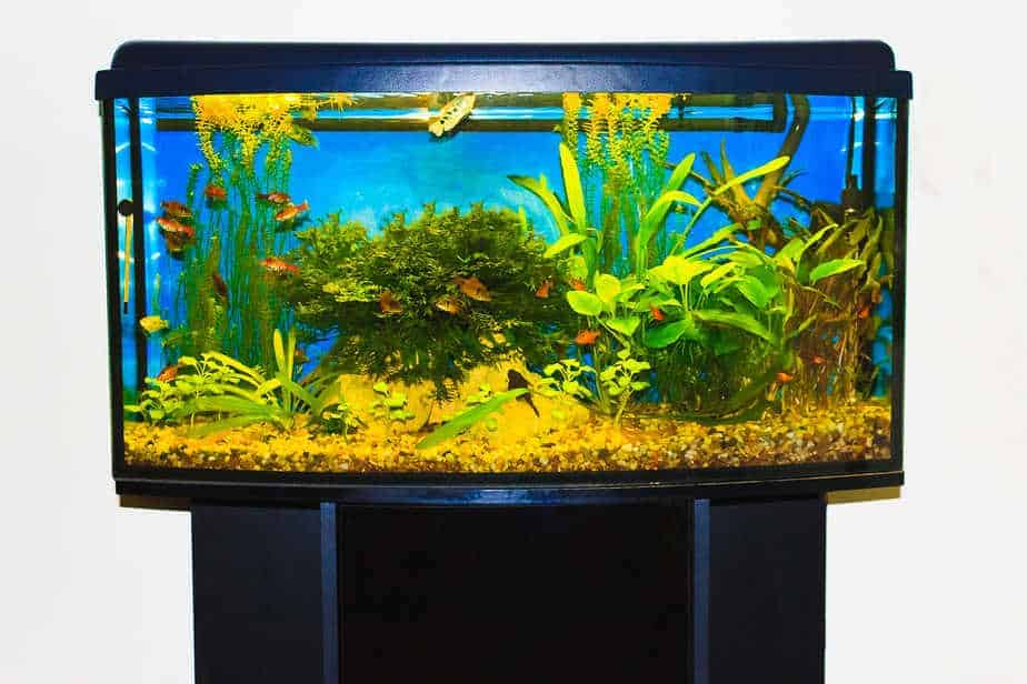 How Much Does An Aquarium Weight | Sizes and Placement