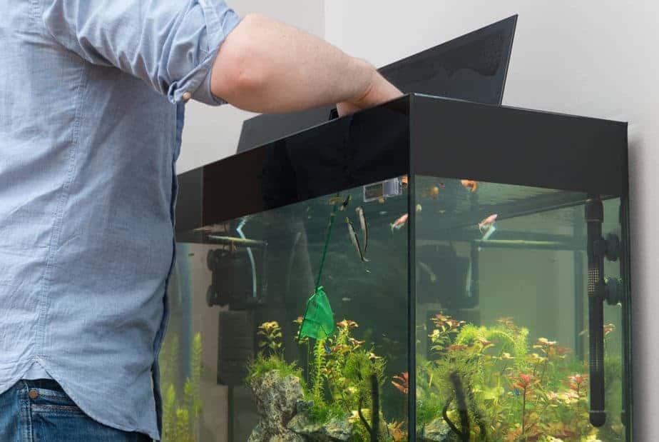 Man catching fishes in the aquarium.
