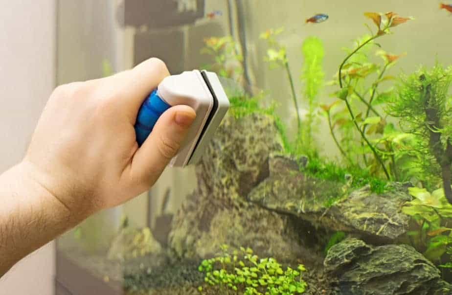 Male hand cleaning aquarium using magnetic cleaner.