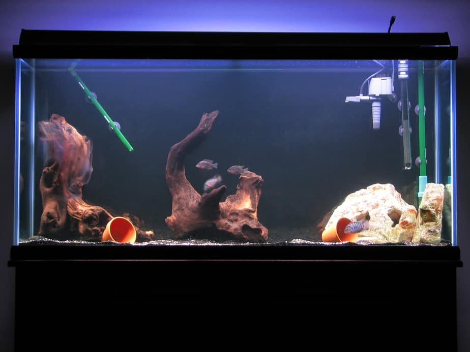 How Do Aquarium Filters Work | Benefits and Different Types