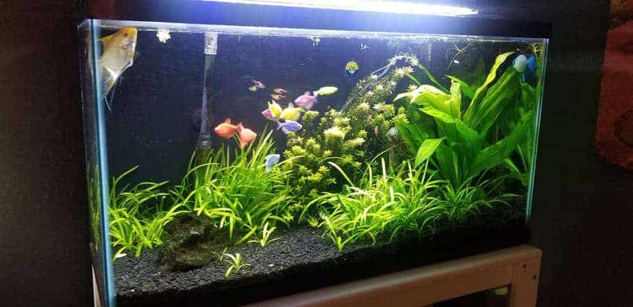 15 Easy Aquarium Plants For Absolute Beginners (With Pics)