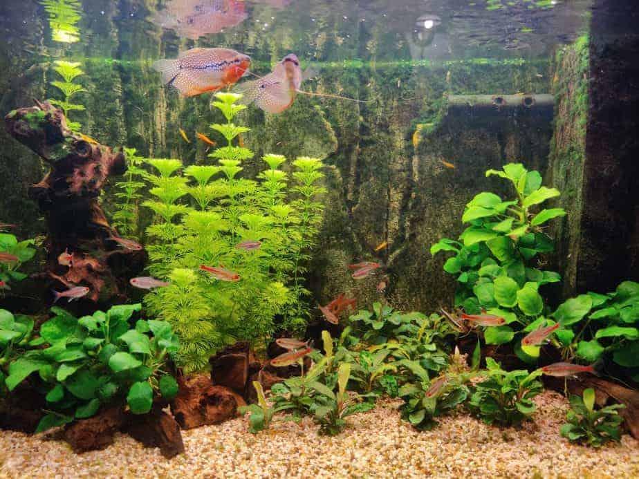 10 Aquarium Plants That Grow Fast | Mandatory Weekly Trims