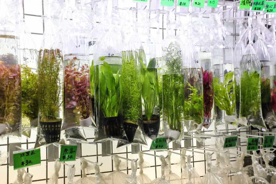 How Long Can Aquarium Plants Live in a Bag   The Answer