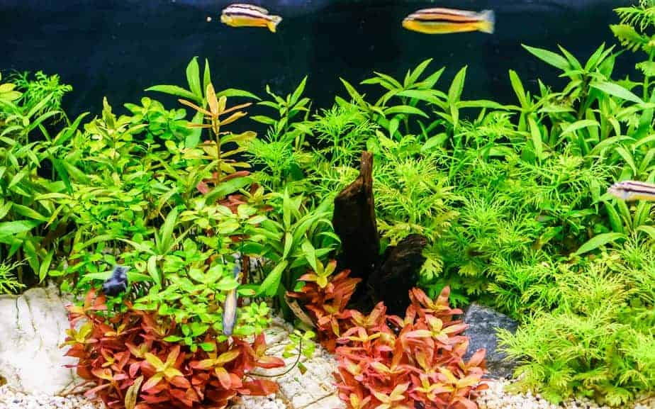 Do Aquarium Plants Need Food – Guide with Beginner Tips