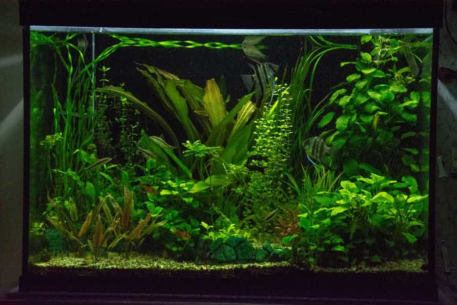 Will Aquarium Plants Grow Under LED Lights – The Answer