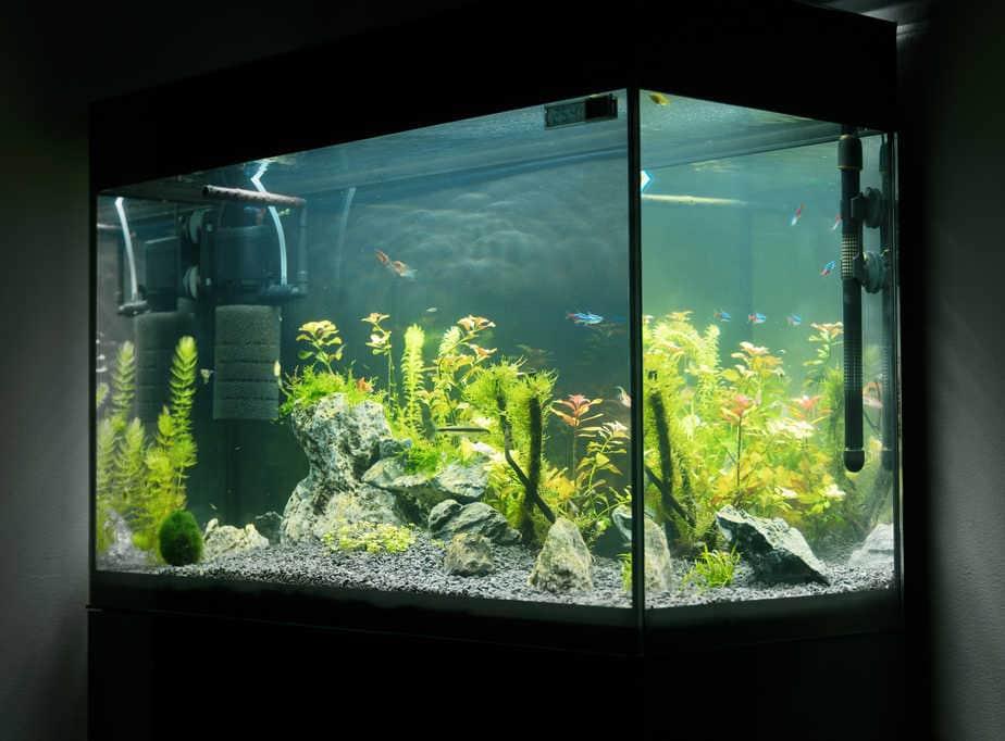 Can Aquarium Plants Touch the Heater – Freshwater Aquarium