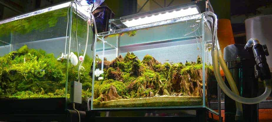 Does a Fish Tank or Aquarium Smell – The Only True Answer