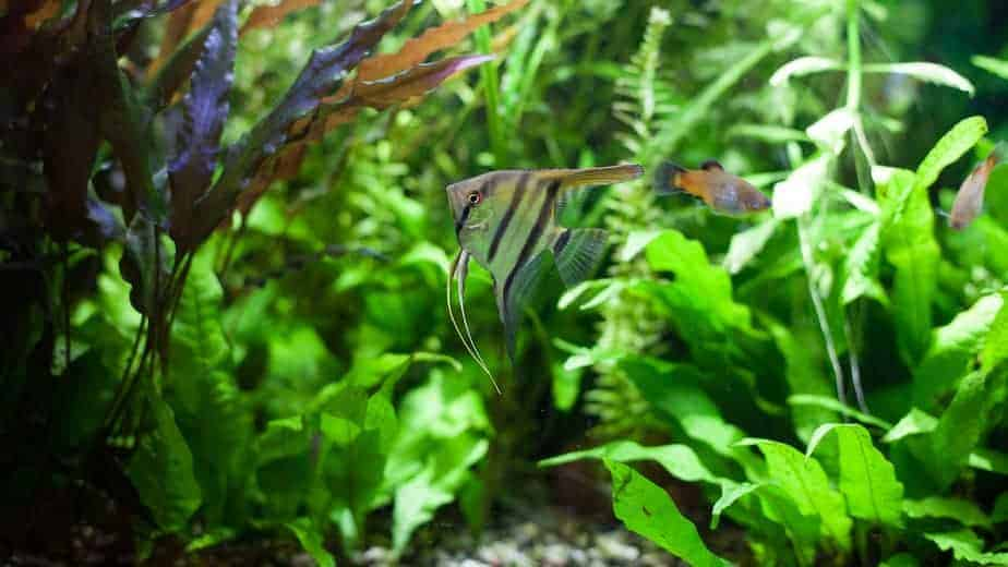 6 Aquarium Plants That Grow In Low Light | With Pictures