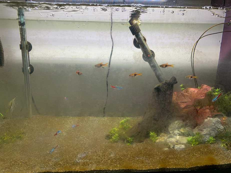 Why Your Aquarium Plants are Turning Brown and What To Do