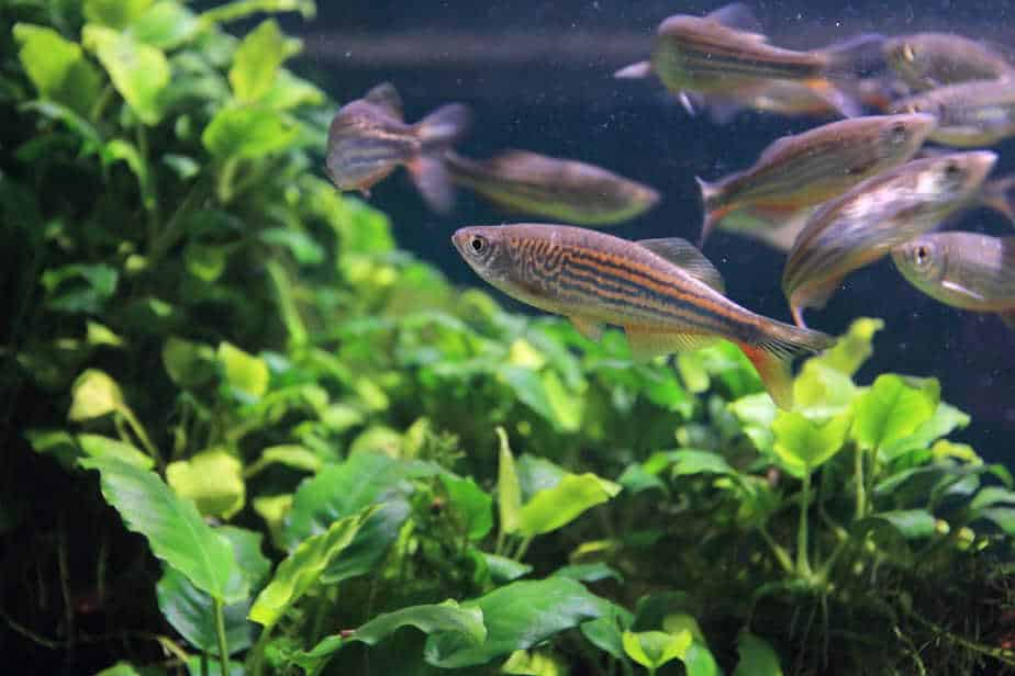 How To Clean a Planted Tank (Step by Step Guide)