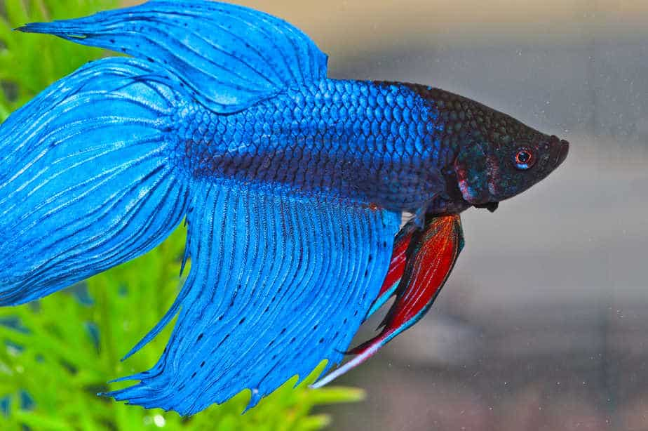 Top 10 Best Aquarium Plants For Betta Fish – With Pictures