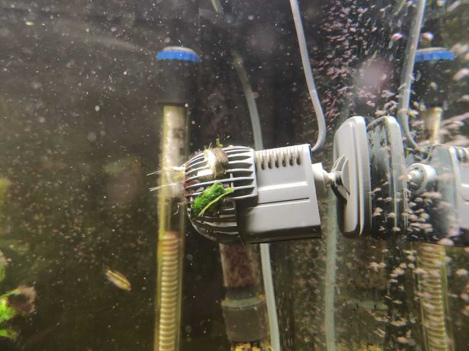 How Much Flow is Needed in a Planted Tank?