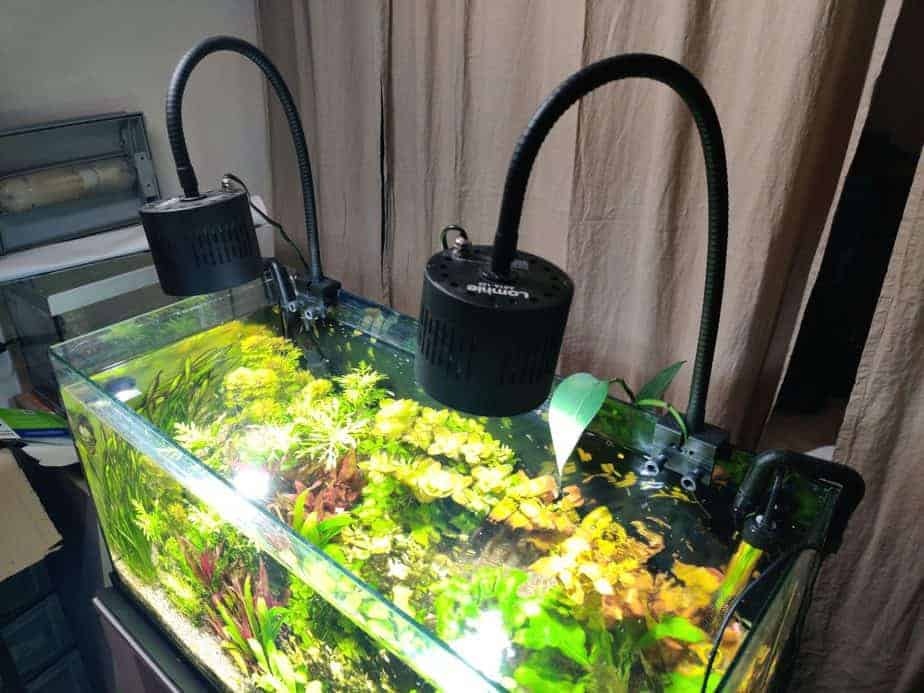 Lominie Asta 120 Freshwater LED Light Review After 2 Months