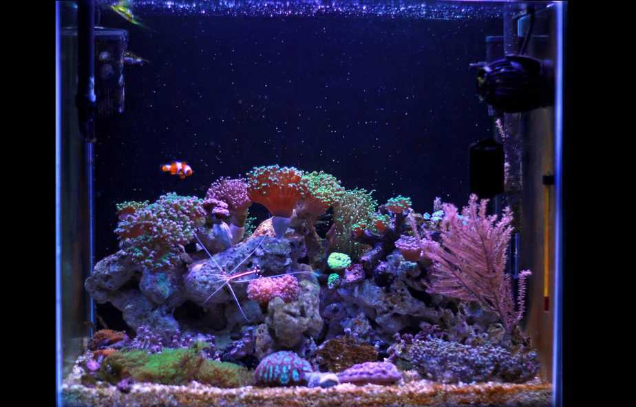 Can You Add Too Many Corals at Once To a Reef Tank?