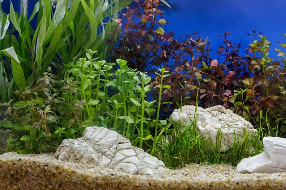 How To Cycle a Planted Tank (As Quick As Possible)
