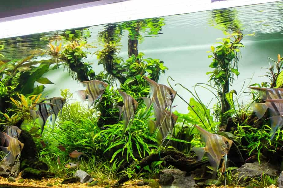 Planted Tank: How Long You Should Leave the Light On