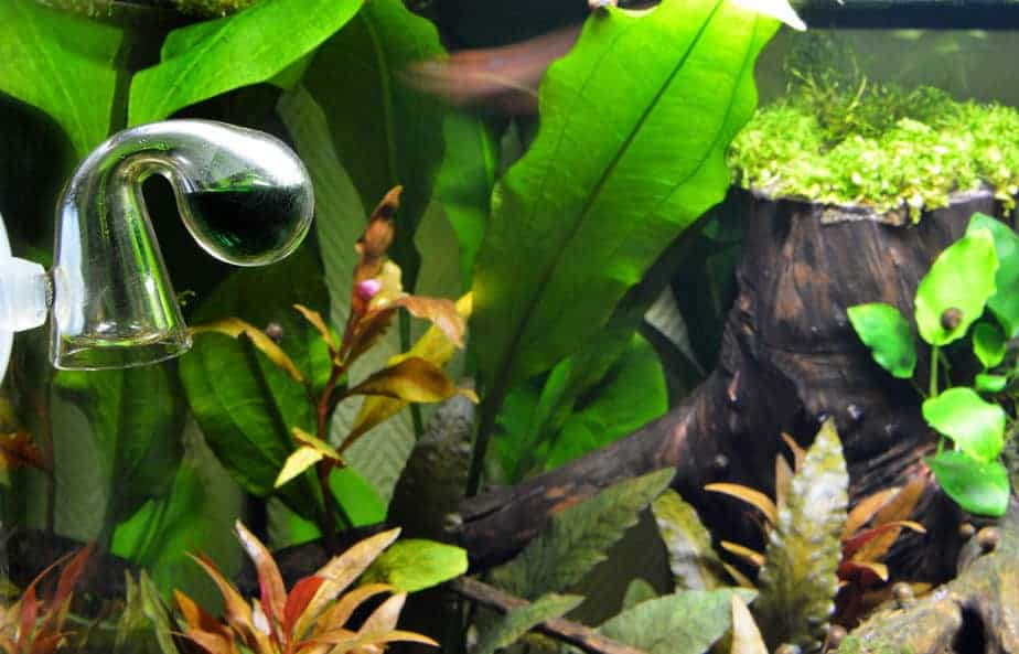 How To Set Up a Basic CO2 System in a Planted Tank (Guide)
