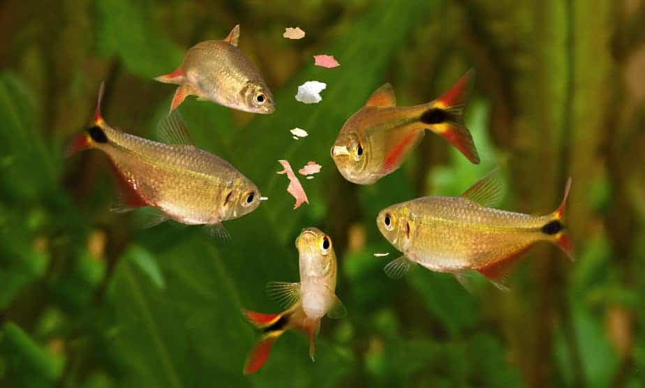 What To Feed Aquarium Fish: A Beginner's Guide To Fish Food