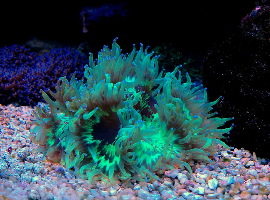 What Is the Best Time To Feed Corals in Your Reef Tank