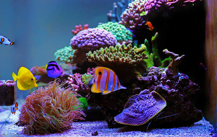 What Is the Best Temperature for a Coral Reef Tank?