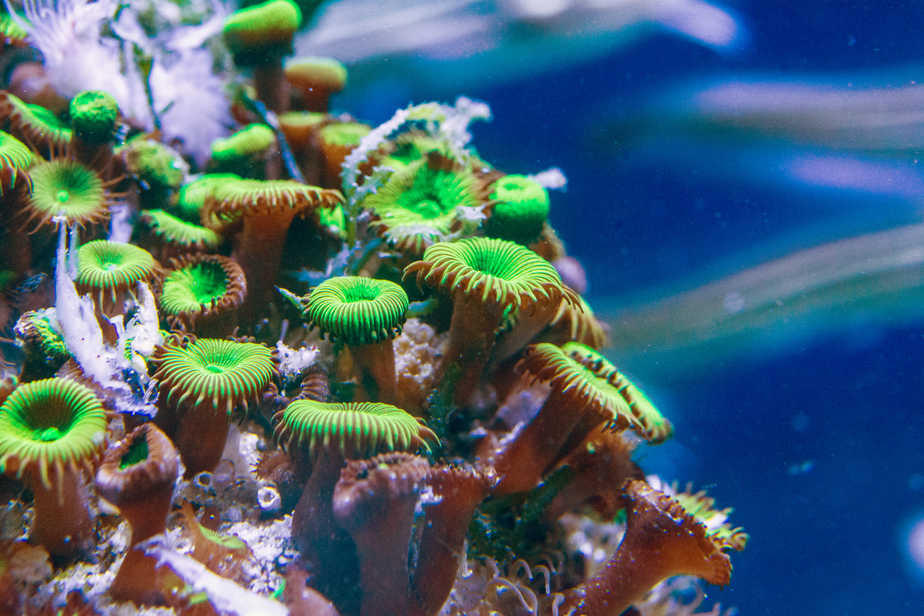 How to Increase Coral Growth in Your Reef Tank?
