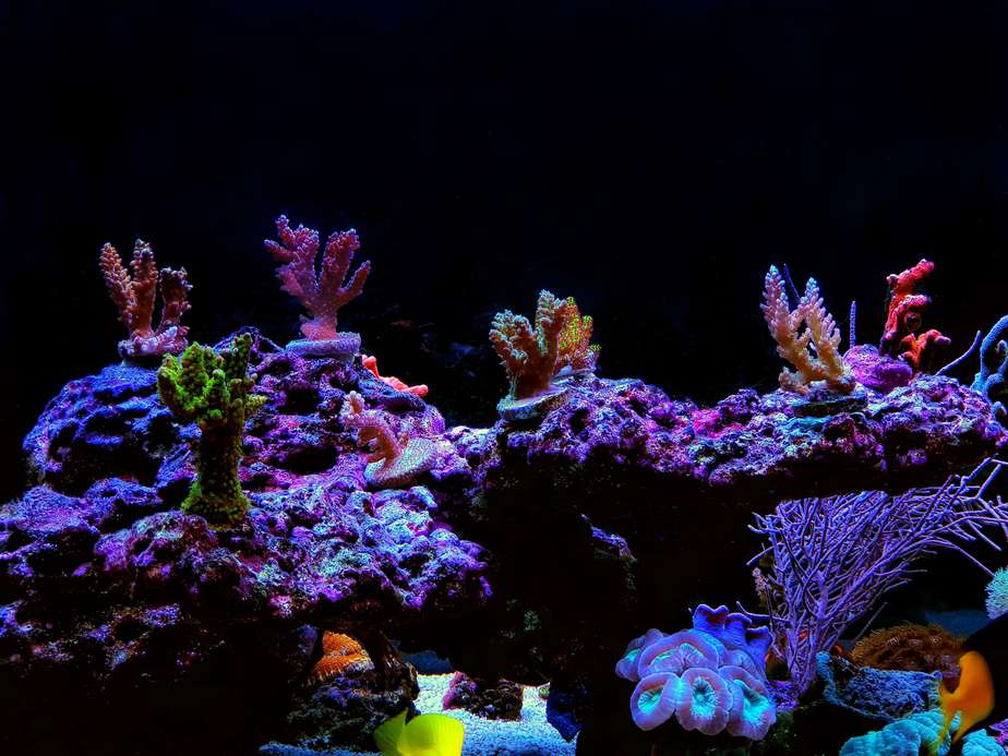 How To Put Coral Frags on Live Rock in a Reef Tank