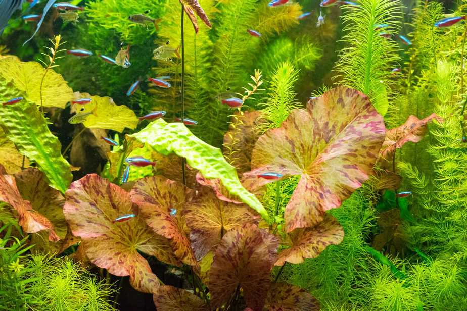 How To Choose the Right Plants for Your Planted Tank