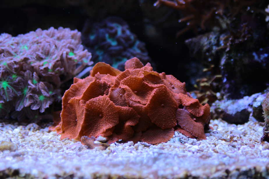 How to Grow Coral for Profit in Your Home Reef Tank