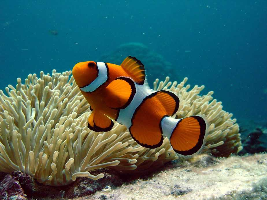 Do You Keep Tropical Fish in a Freshwater or Saltwater Tank