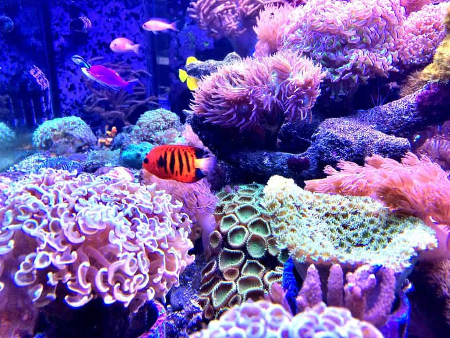 Best Food Options for Healthy Coral Growth (2021 Guide)