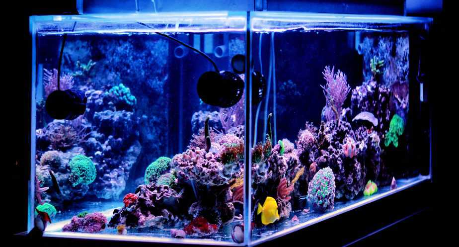 How Fast Does Coral Grow in a Home Reef Tank? The Answer