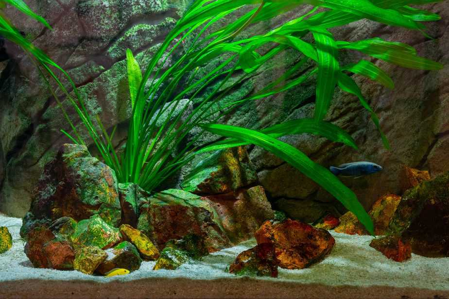 Why Are Your Aquarium Plants Turning Black? The Answer