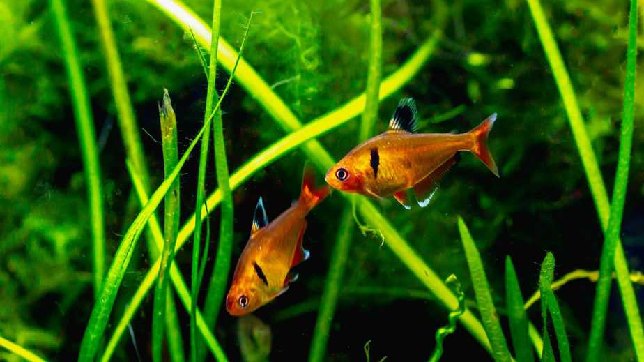 What Are the Benefits of Live Plants to Your Aquarium?