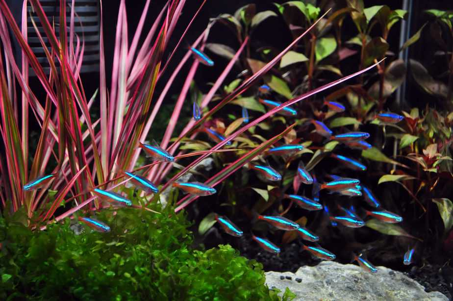 What Is the Cheapest Pet Fish? Cost-Effective Fishkeeping