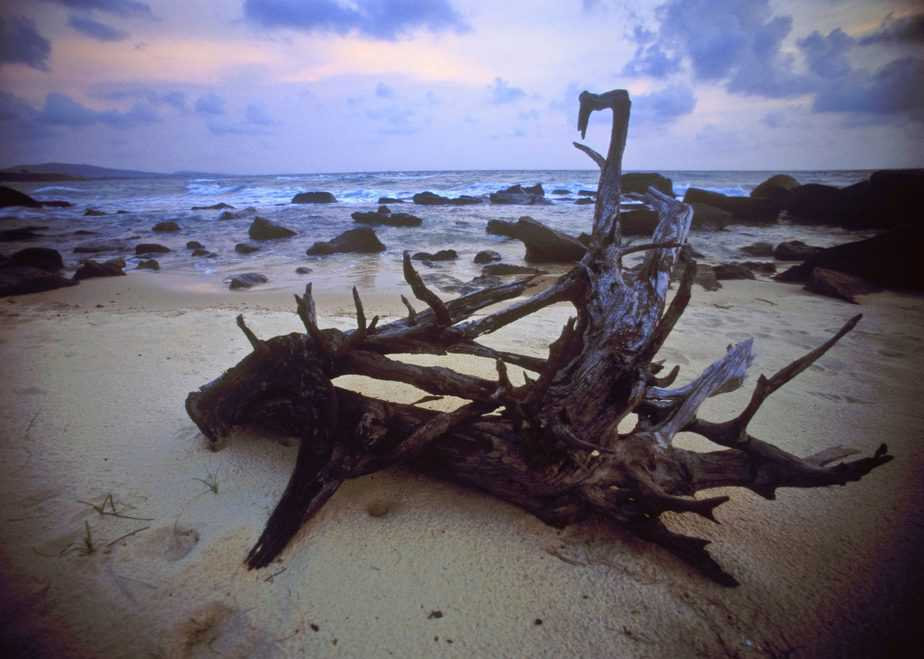 Can You Add Driftwood to a Saltwater Aquarium? The Answer