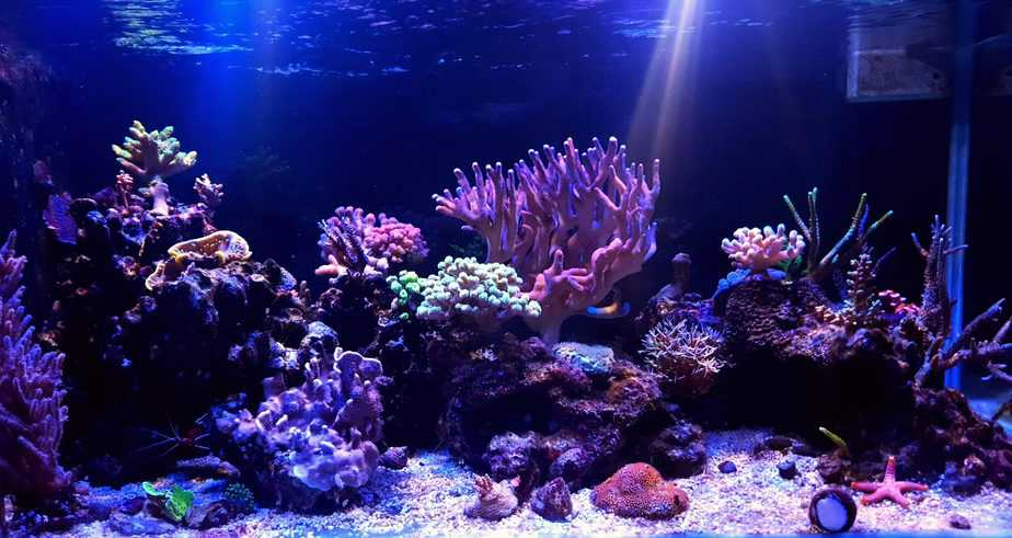 Do Corals Need White Light To Grow in Your Reef Tank?