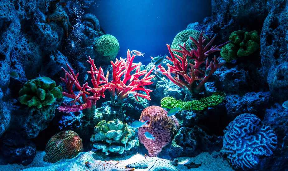 How Long Does It Take for Corals To Open Up?