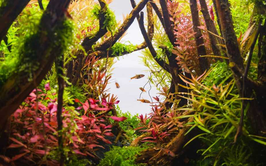How Long Can Aquarium Plants Live Without Water?
